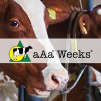 aaa-weeks-thumb-alt